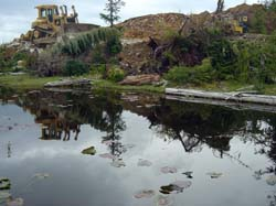 Pan Pacific Aggregates destroying wetlands and old growth forests